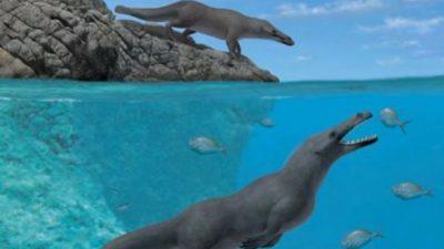 Пронајден фосил на кит со четири нозе стар 43 милиони години