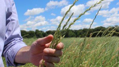 Оваа нова храна може да ја спаси нашата планета