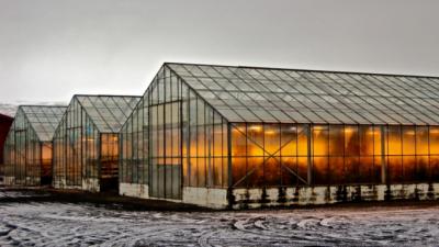 Фармерите од Исланд открија начин да одгледуваат храна на Арктикот