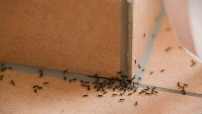 Спасете се од мравките на топлото време – бегаат од една намирница која сите ја фрламе