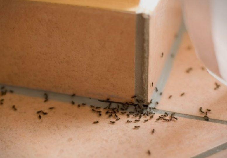 mravki.jpg