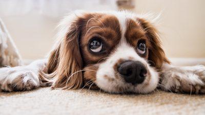 Младо момче наместо кратка биографија, во оглас за работа пратил фотографија од своето куче