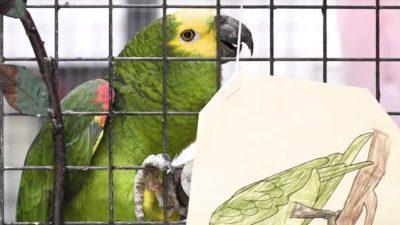 Ученици приредија забава за 70. роденден на училишниот папагал