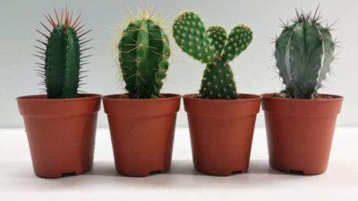Растенија за вашата канцеларија што се лесни за одржување