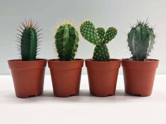kaktusi2-696x521-1.jpg