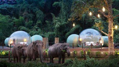 Во Тајланд може да изнајмите соба каде ќе бидете опкружени со слонови