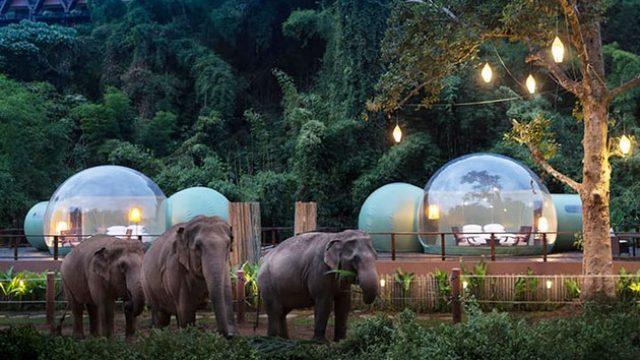 odmoralishte-vo-tajland-vo-koe-mozhete-da-spiete-opkruzheni-so-slonovi-02.jpg