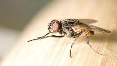 Нема да ви влезе мува во домот- не го поднесуваат ова, ставете го до прозорците и вратите