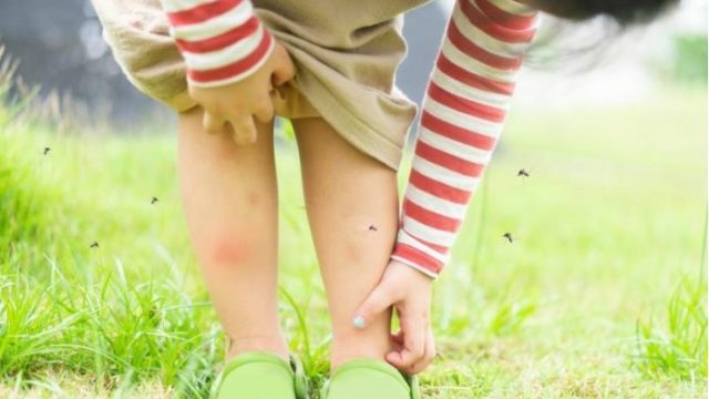Oslobodete-se-od-komarcite-za-sekunda-potrebni-vi-se-samo-dve-sostojki.jpg
