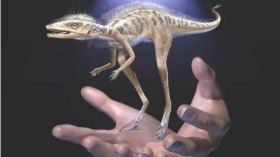 Пронајден диносаурус голем колку паметен телефон