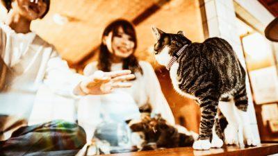 Јапонско одморлиште каде што гостите заспиваат гледајќи во мачки