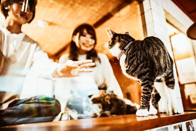 Japonsko-odmorlishte-kade-shto-gostite-zaspivaat-gledajkji-vo-machki.jpg