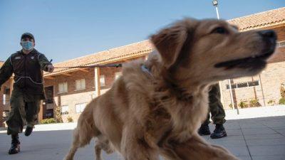 Во Дубаи веќе се користат кучиња што откриваат коронавирус кај патниците