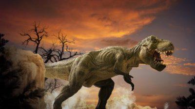 АУКЦИЈА: Скелет од тираносаурус стар 67 милиони години се продава за 6 до 8 милиони долари