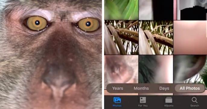 majmun-selfi.jpg