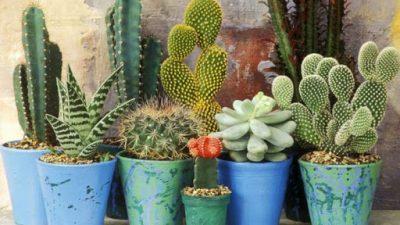 Добро е да ги имате дома: Растенија што го прочистуваат воздухот во домот