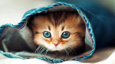 Купиле преслатко маче преку интернет- неколку недели подоцна мачката пораснала, а тие завршиле во затвор