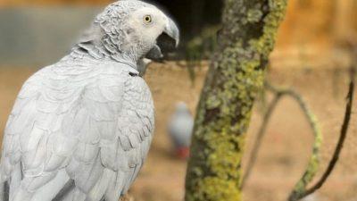 Папагали отстранети од зоолошка градина: Многу ги пцуеле посетителите