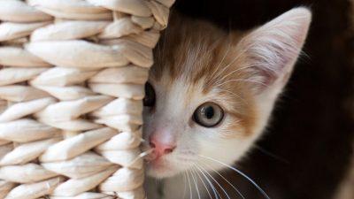 Чувајте маче, не сте свесни како тоа може да ви помогне – дознајте сега