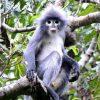 ФОТО: Пронајден нов вид мајмун во Мјанмар