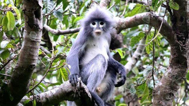 FOTO-Pronajden-nov-vid-majmun-vo-Mjanmar.jpg