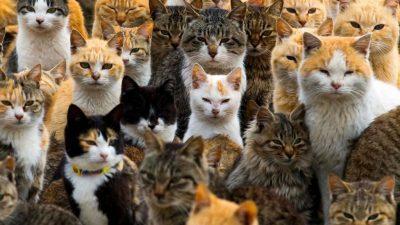 Хотел за мачки во Анталија: Дрвена трикатна зграда со 64 соби